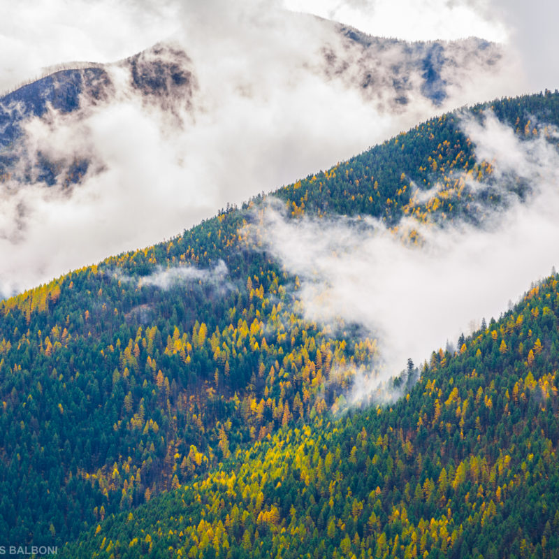 Cabinet Mountain Mists
