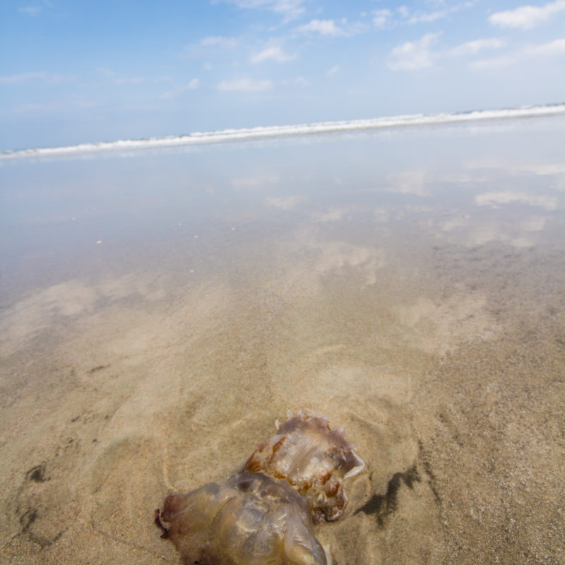 Beached Jelly