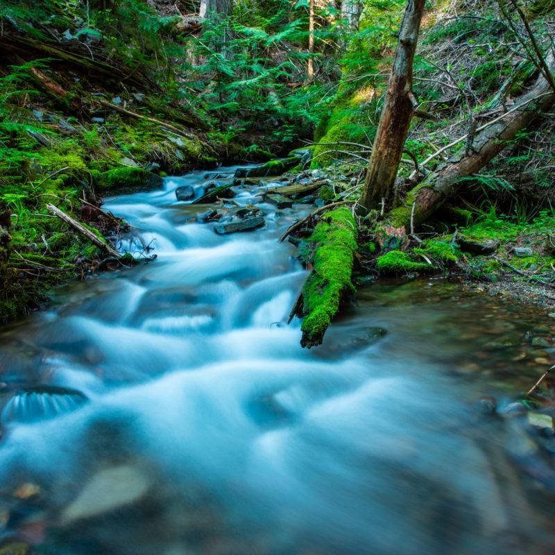 Newton Creek